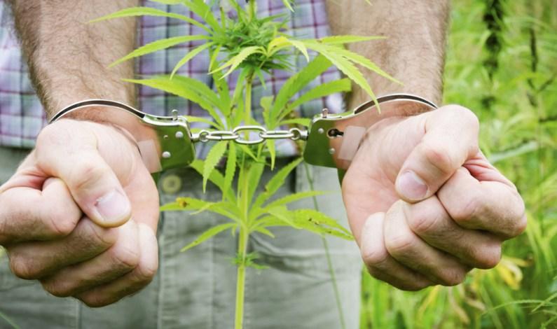 Dlaczego marihuana nazywana jest trawką?, THCLand.pl