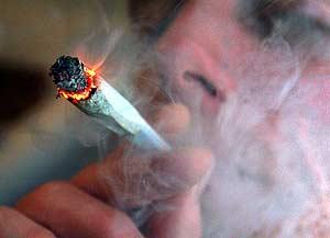 Marihuana a Wojna Narkotykowa, THCLand.pl