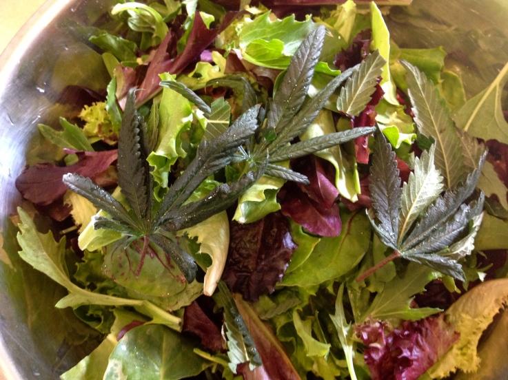 kuchnia przepis salatkathc - Eat A Cannabis Salad