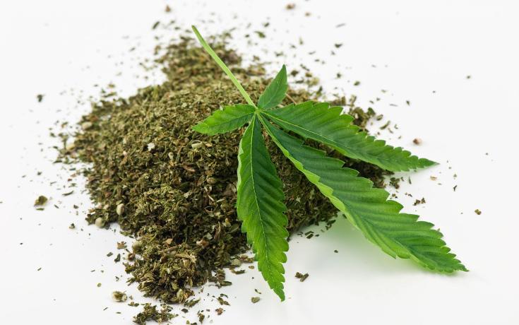 Fakty o Marihuanie, THCLand.pl