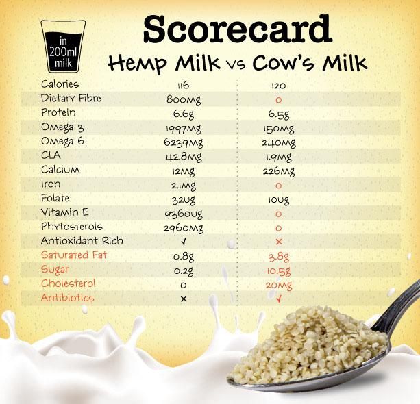 Jak stosować nasiona, olej i białko konopne, THCLand.pl
