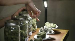 DEA planuje przeklasyfikowanie marihuany w połowie tego roku, THCLand.pl