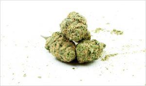 zielona-roslina-marihuana-mery