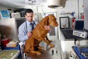 Leczenie chorego psa medyczną marihuaną, THCLand.pl
