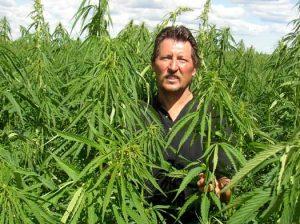 Nie wszyscy rolnicy uprawiający marihuanę w Kalifornii chcą jej legalizacji, THCLand.pl