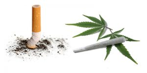 Cannabis i tytoń, THCLand.pl