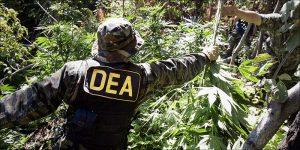 DEA przyznało, że marihuana nigdy nikogo nie zabiła, THCLand.pl