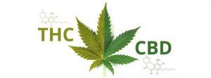 Czy marihuana sprawia, że jesteś w złym humorze?, THCLand.pl