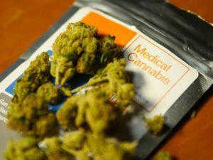 Medyczna marihuana, THCLand.pl