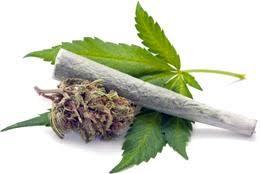 Marihuana zamiast tytoniu, THCLand.pl