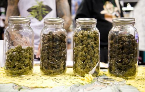 Kto kupuje legalną marihuanę?, THCLand.pl