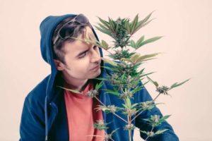 Marihuana podczas przeziębienia, THCLand.pl