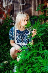 Legalizacja marihuany w Kanadzie, THCLand.pl