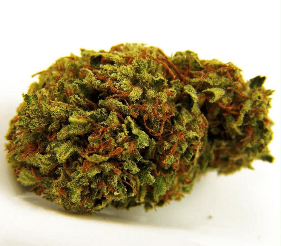 Legalizacja marihuany w Maine, THCLand.pl