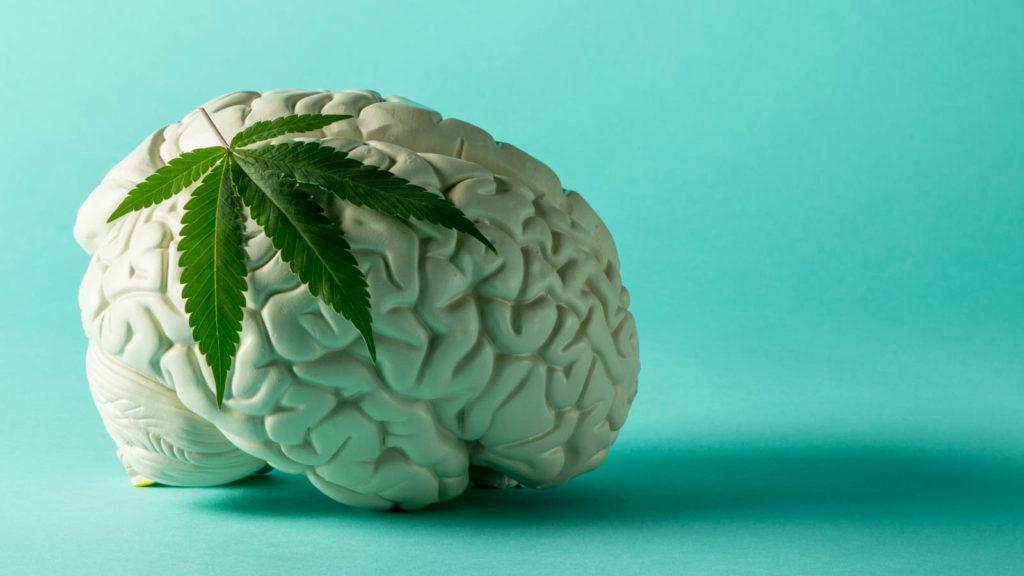 Cannabis i mózg: Przewodnik użytkownika, THCLand.pl