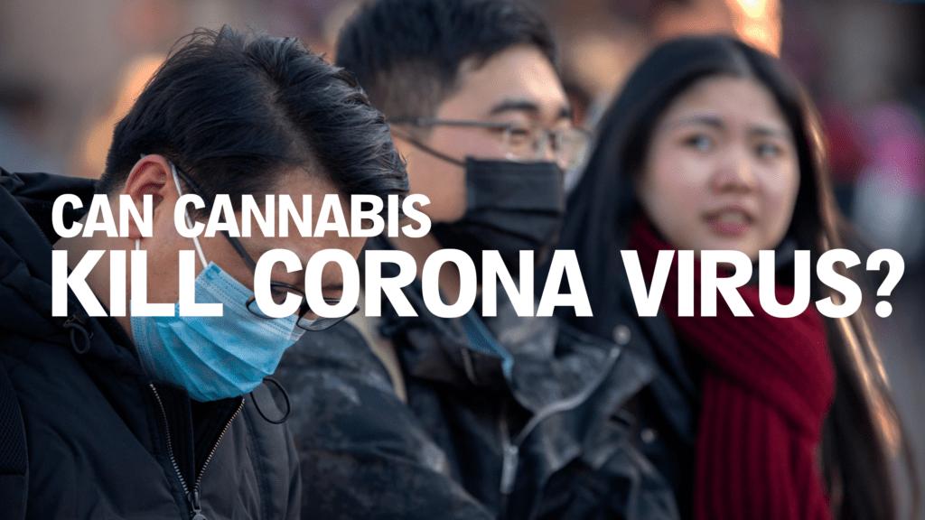 Porady na temat marihuany w czasie koronawirusa, THCLand.pl