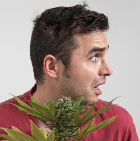 Sposoby na Określenie Jakości Twojej Marihuany, THCLand.pl