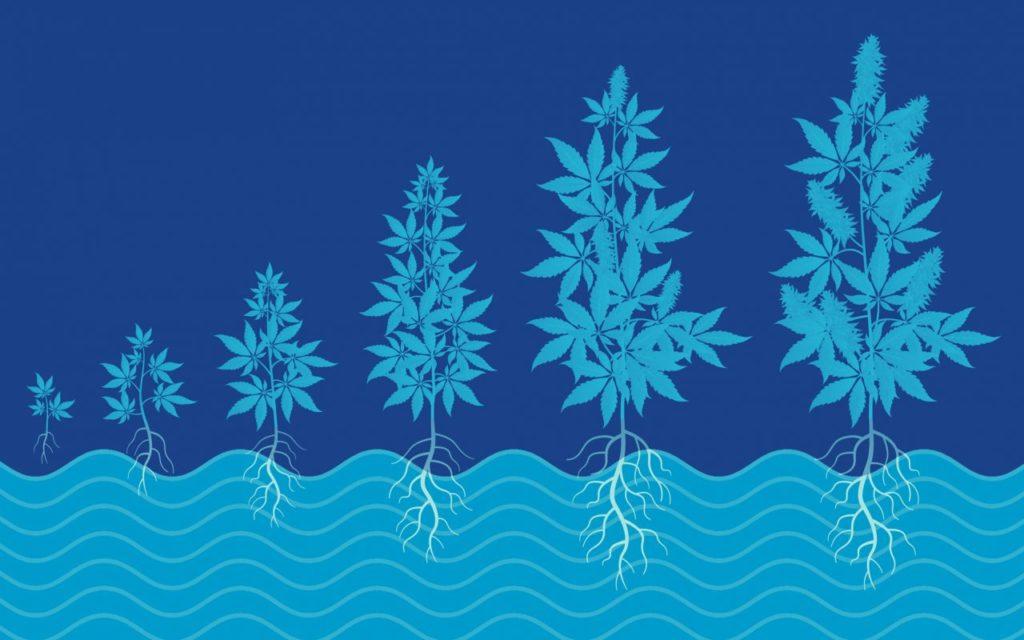 Uprawa hydroponiczna jest lepsza niż uprawa glebowa, THCLand.pl