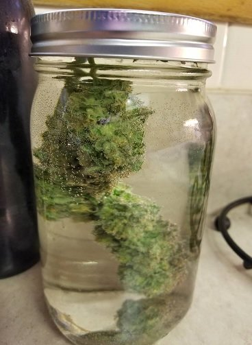 Wskazówki Uprawy Marihuany w Pomieszczeniach, THCLand.pl