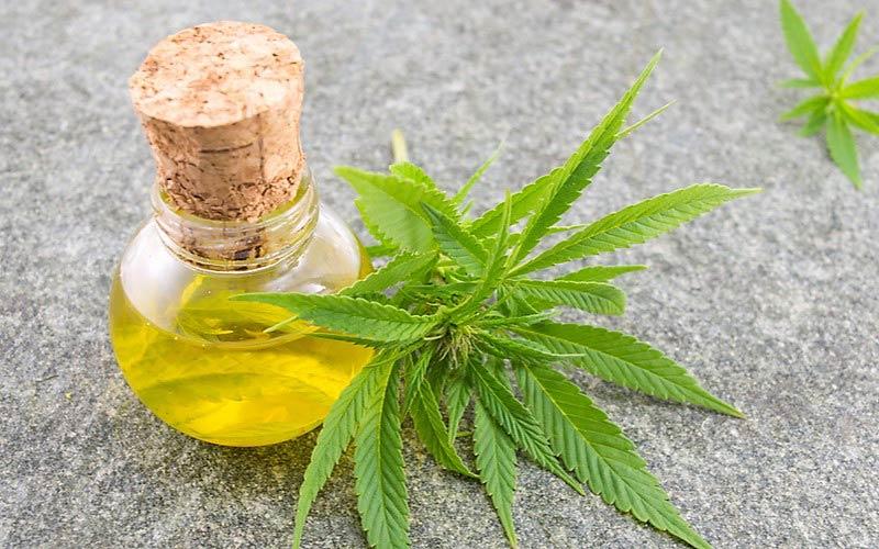 Brazylia Zatwierdza Medyczną Marihuanę, THCLand.pl