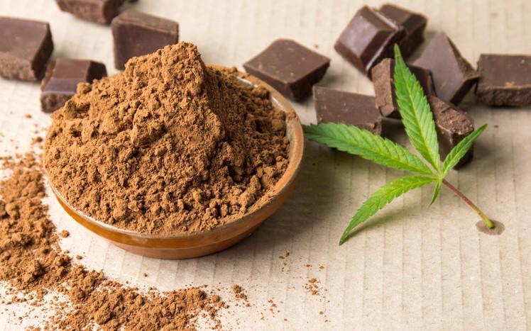 Czekolada Utrudnia Testowanie Mocy Produktów Cannabis, THCLand.pl